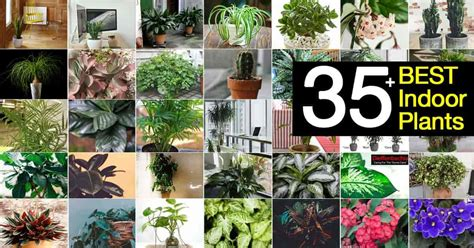 unique indoor plants houseplants for sale plant green plants awesome 35 of the best indoor plants for your home