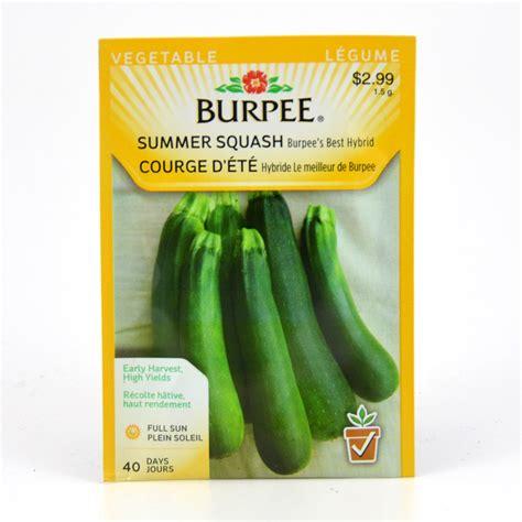 burpee  hybrid summer squash seeds arts nursery