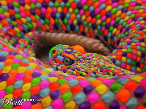snake colors the rainbow snake 2 god s beautiful creatures colorful