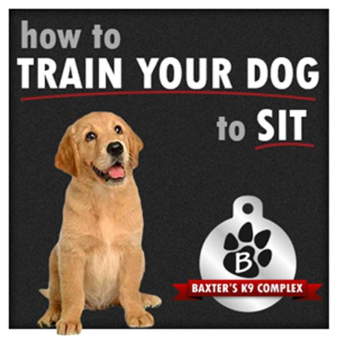 how to trained dogs how to your to sit baxter s k9 complex