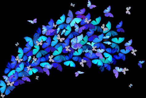 imagenes de mariposas bonitas animadas mariposas saltarinas de colores