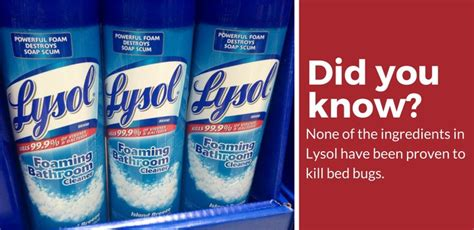 can lysol kill bed bugs will lysol kill bed bugs 28 images does lysol kill bed