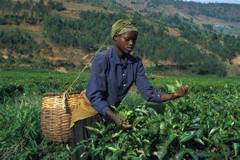 un jobs rwanda africa renewal magazine jobs and equity key to africa s
