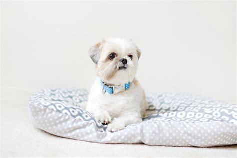 diy dog bed no sew lisa s world 9 fabulous ways to create a modern diy dog bed