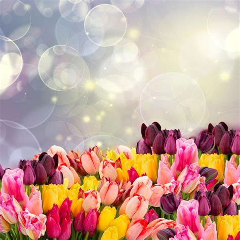 Wall Paper Wall Sticker Photo Wall Tulips 8 900 tulip flower wallpaper android apps auf play