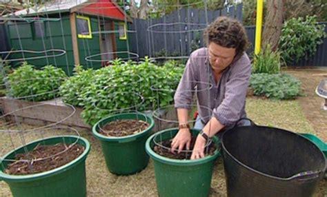 Pupuk Majemuk Untuk Cabe tanaman hidroponik bandung budidaya mentimun di halaman rumah