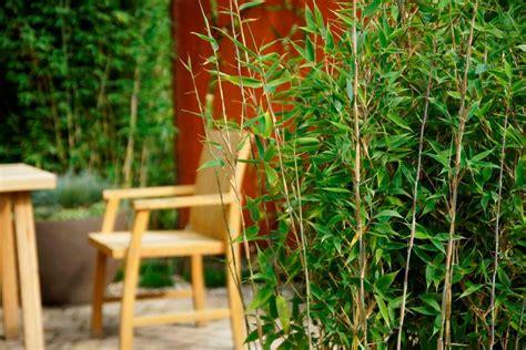 bambus pflanzen wann bambus wann pflanzen wann ist pflanzzeit f r bambus