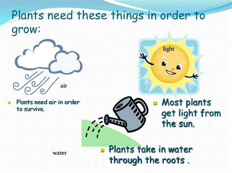 what of light do plants need what do plants animals need to live