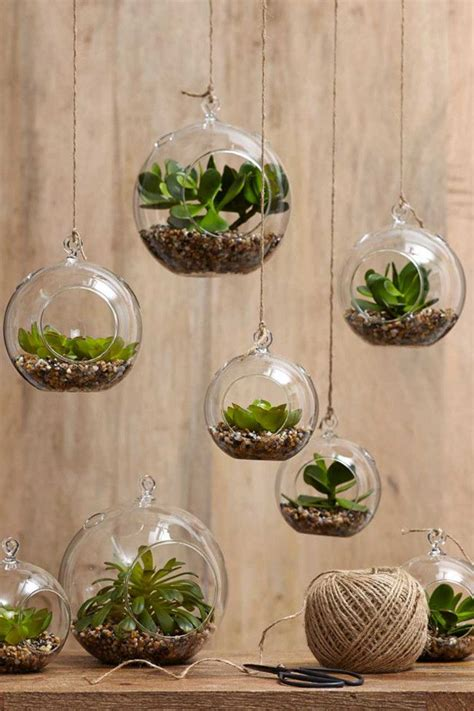 best indoor hanging plants plant gifts on pinterest succulents air plants and