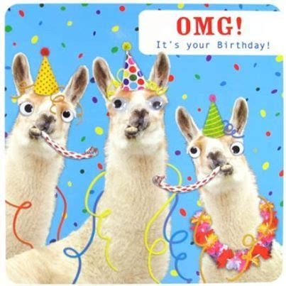Llama Birthday Meme - luxury llama birthday meme happy birthday llama images