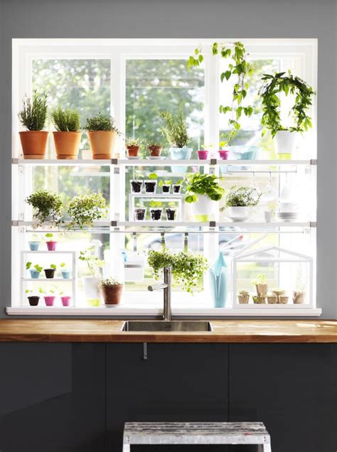 kitchen window herb garden herb garden in the window garden tea party pinterest