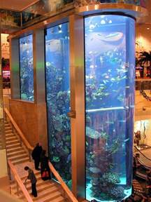 311 best images about home aquariums on