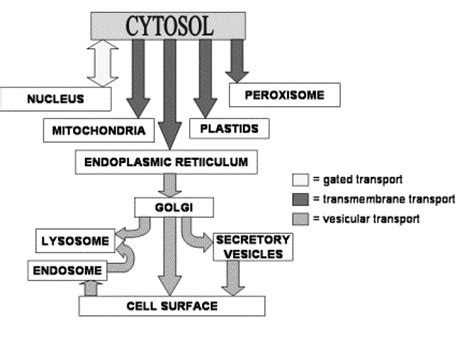 protein exles vesicular transport proteins that are