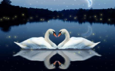 free download images of love birds amazing wallpapers love bird wallpapers wallpaper cave
