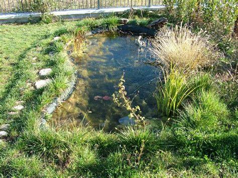 laghetti per giardini laghetti artificiali per anfibi forum natura