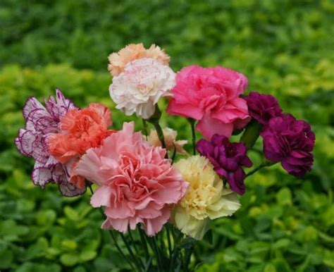 daftar nama bunga lengkap beserta gambar dan penjelasannya bibitbunga