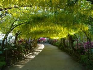 file laburnum arch bodnant garden jpg wikimedia commons
