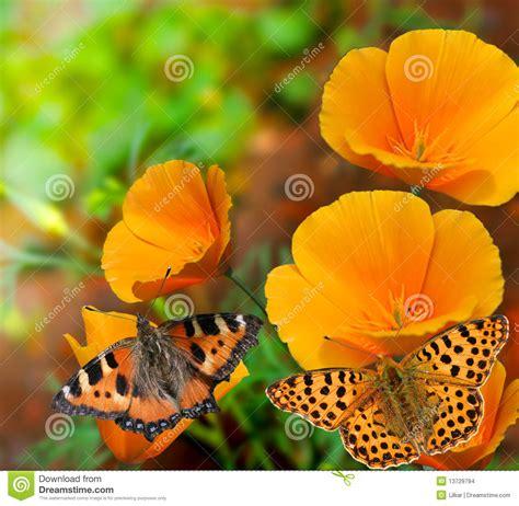 immagini sui fiori farfalle sui fiori fotografia stock immagine di