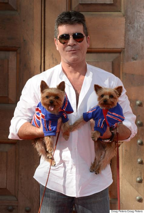 simon cowell dogs simon cowell to protect dogs from seagull attacks with specially made helmets