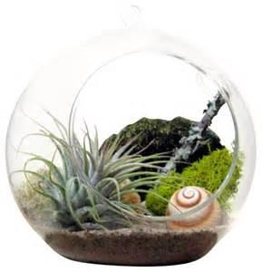 spiral air plant terrarium contemporary terrariums by sea amp asters