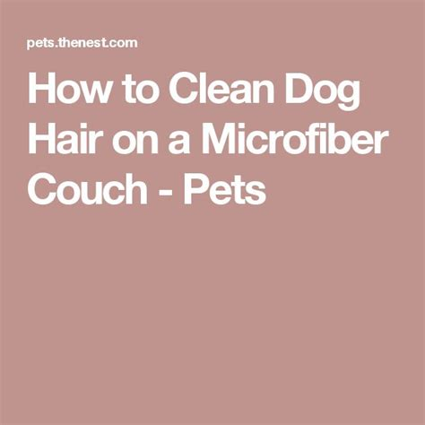 how to clean dog hair from couch 25 unique cleaning dog hair ideas on pinterest spring