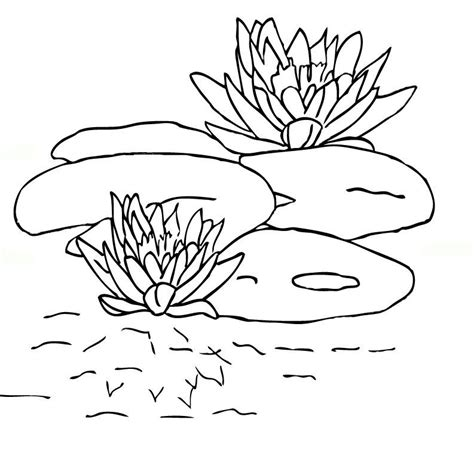 Lily Pad Coloring Page Gallery Pad Coloring Page