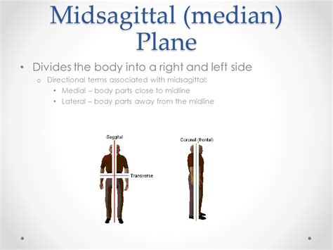 a section that divides the body into left and right body planes and cavities ppt video online download