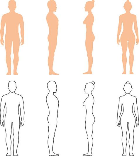 design by humans similar royalty free human anatomy clip art vector images