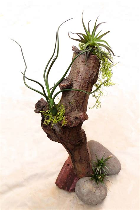 Turtle Succulent Planter by 7 Ways To Display Air Plants Jesse Garden