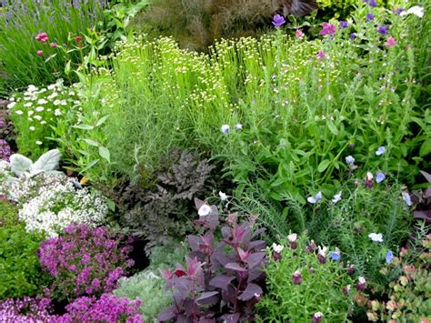 herbal garden herb garden design course jekka s herb farm