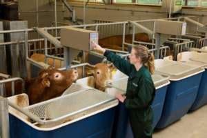 alimentazione bovini da carne nuovo centro di ricerca per vitelli e bovini da carne in