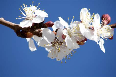 immagini di fiori bianchi inviti battesimo fai da te immagini da stare