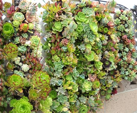 Vertical Gardening Ideas.Tube Planters