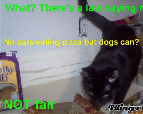 can dogs eat pizza crust what theres a saying no cats pizza but dogs can not fair picture