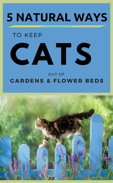 how to keep cats out of flower beds 5 natural ways to keep cats out of gardens flower beds