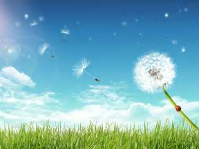 dandelion getting life in balance earth gifts healers