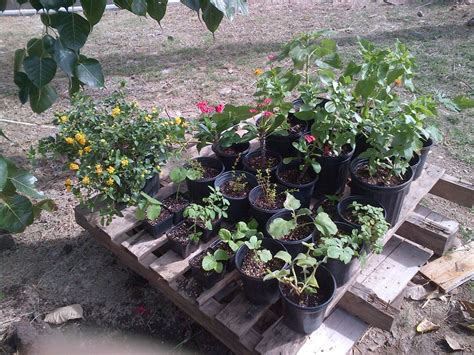 vegetable garden plants for sale spaceless gardens sets a display of ornamental and