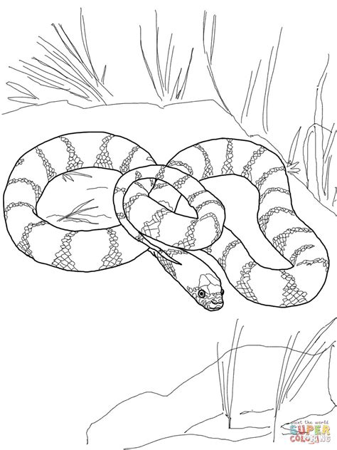 S Snake Coloring Page by Snake Coloring Pages Page Image Clipart Images Grig3 Org