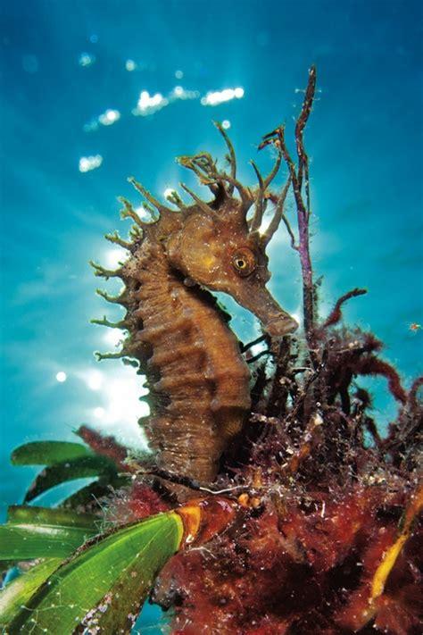 amazing undersea photography incredibly beautiful