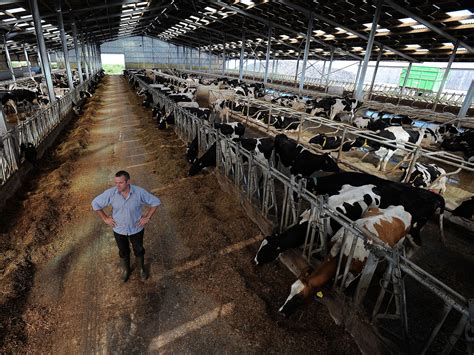 Wilson Homes Floor Plans plummeting milk price prompts stealth rise of 2 000 cow