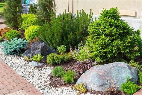 planting plants in your sacramento landscape design