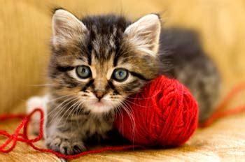 Sho Kucing House Of Anju understanding cat behavior as a radar of his health