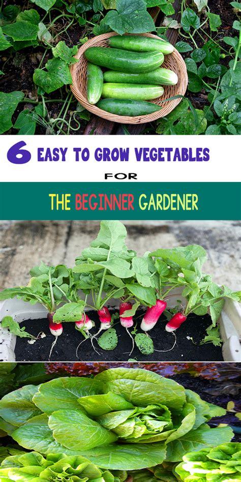 easy  grow vegetables   beginner gardener