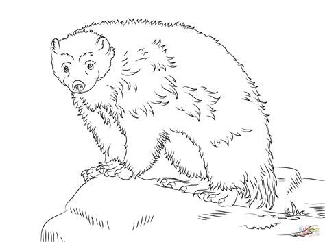 84 coloring pages wolverine animals wolverine