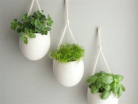 indoor herbs indoor herb garden ideas 3 girls holistic