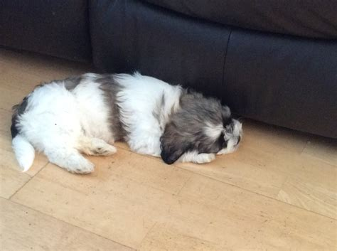 how much should an 8 week puppy eat time puppy owner confused by how much i should feed pup help mumsnet