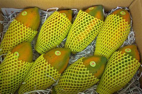 m y fruit ltd papaya products taiwan papaya supplier
