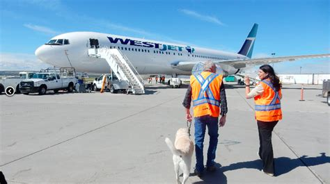 Air Canada Pet Policy Cabin by How To Get An Esa Letter In Canada For Air Travel Esa