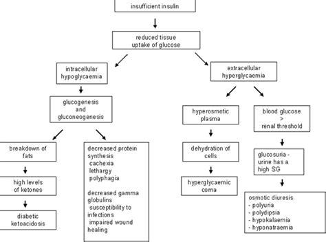 Pathophysiology Of Diabetes Type 2 Essay by Diabetes Pathophysiology Essay Thedrudgereort280 Web Fc2