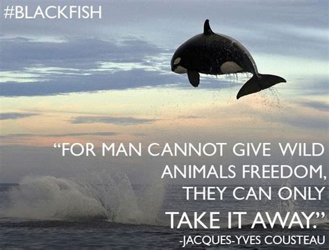 killer whales in captivity quotes